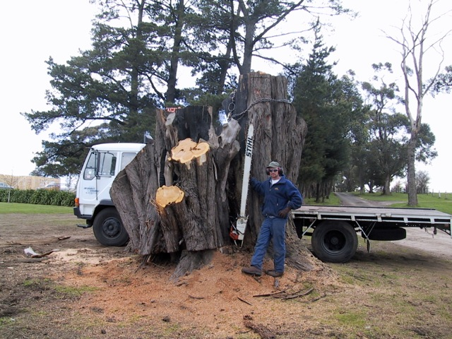 stump removal kew