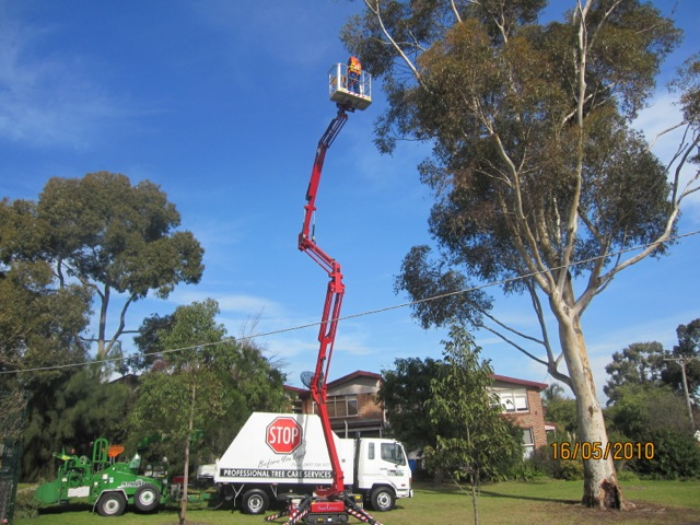 tree pruning kew